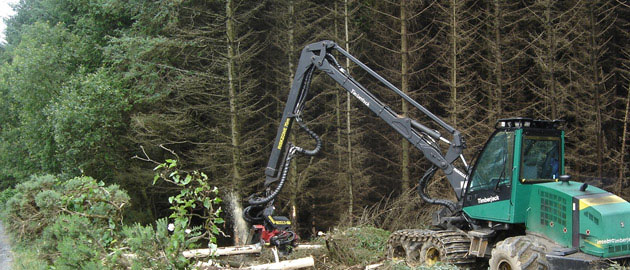 Forestry Ireland, Irish forestry, Afforestation