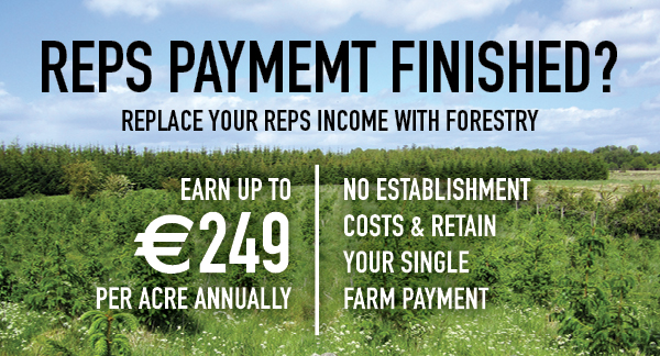 FEL - Forestry Service in Ireland, Forestry Management