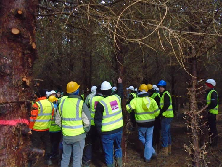 veon-irish-forestry-harvesting-field-day-nov-2016-10